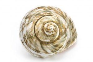nautlius shell niching spiral