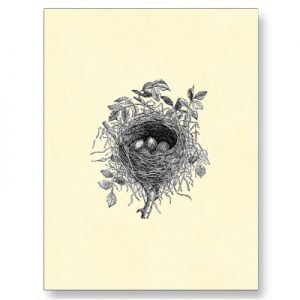 vintage_bird_nest_illustration_postcard-p239633182030665626baanr_400