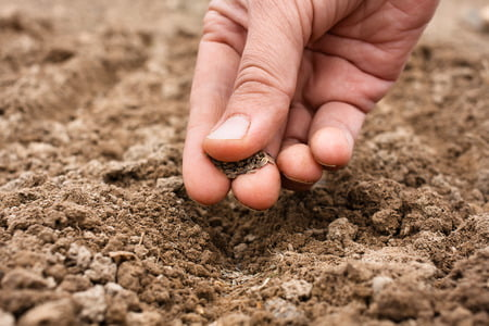 40330571 - closeup of woman hand planting seeds in soil